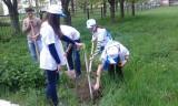 Студенты высаживают молодые деревья